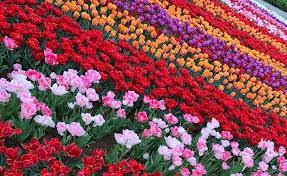 2020 apr 10 bloemveld
